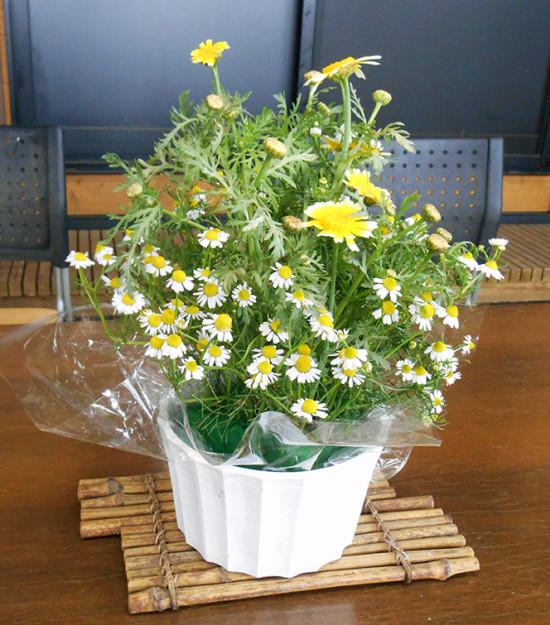 カモミール花瓶_s
